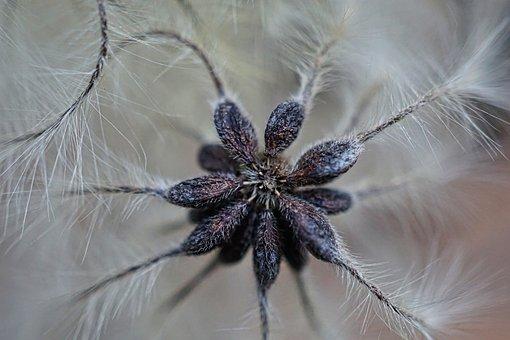 Blackthorn, Macro, Nature, Bush, Blossom, Bloom, White