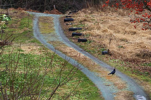 Walking Bird, Country, Dirt Road, Animal, Winter, Cold