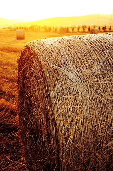 Hay, Hay Ball, Sunset, Field, Agriculture, Nature