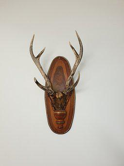 Ornament, Deer, Reindeer, Animal, Antlers, Hart, Deco