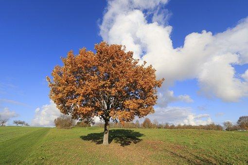 Autumn, Sun, Nature, Landscape, Fall Foliage, Leaves