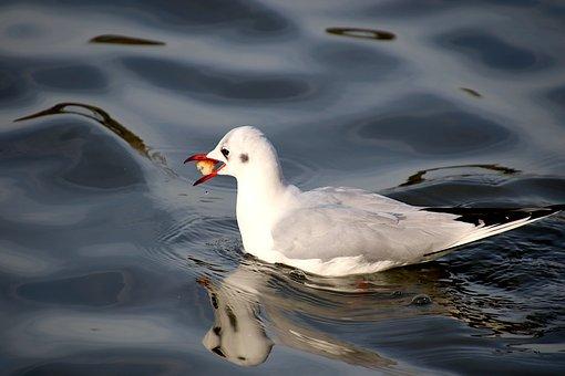 Seagull, Birds, Basin, Public Park