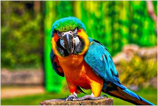 Bird, Parrot, Beautiful, Nature, Animal World, Colorful