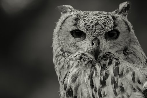 Black And White, Animal World, Nature, Eyes, Plumage