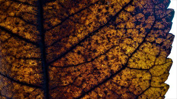 Autumn, Leaf, Background, Decomposition, Decay, Death