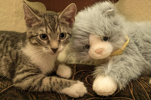 Cat, Small, Soft Toy, Mackerel, Kitten, Domestic Cat