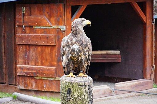 Falconry, Bird Park, Wildlife Park, Feather, Plumage