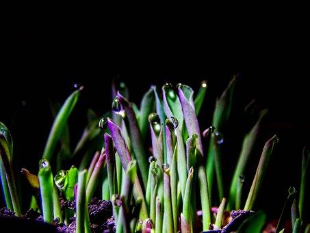 Plants, Rocio, Nature, Flora, Damp