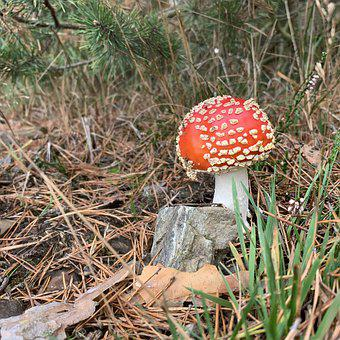 Mushroom, Fly Agaric, Toxic, Nature, Red, Spotted