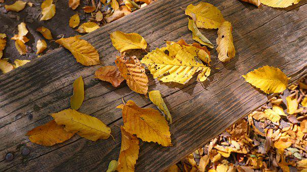 Foliage, Autumn, Yellow, Dining Table, Forest, Nature