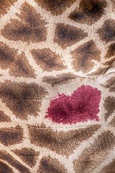 Pattern, Heart, Love, Giraffe, Background, Texture