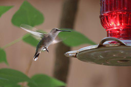 Hummingbird, Bird, Feathers, Cute, Bird Feeder