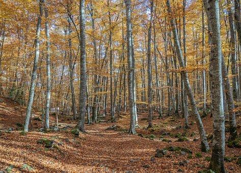 Nature, Trees, Landscape, Autumn, Forest, Landscapes