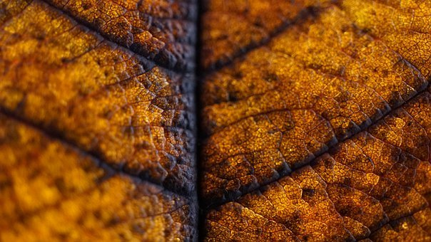Golden Autumn, Background, Leaf, Macro, Season, Nature