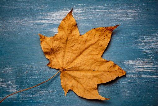 Leaf, Blue, Background, Pattern, Leaves, Decoration
