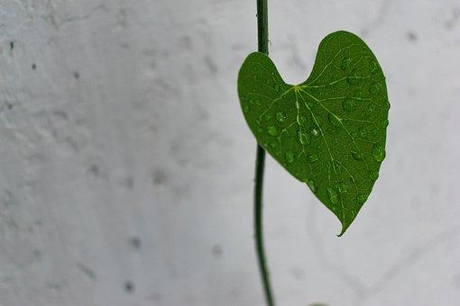 Leaves, Green, Nature, Water Drops, Raindrop