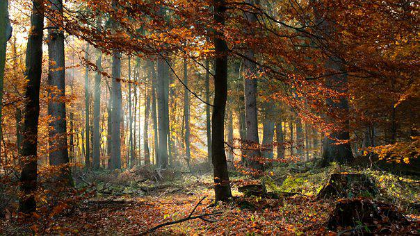 Forest, Autumn, Nature, Landscape, Trees, Light, Fog