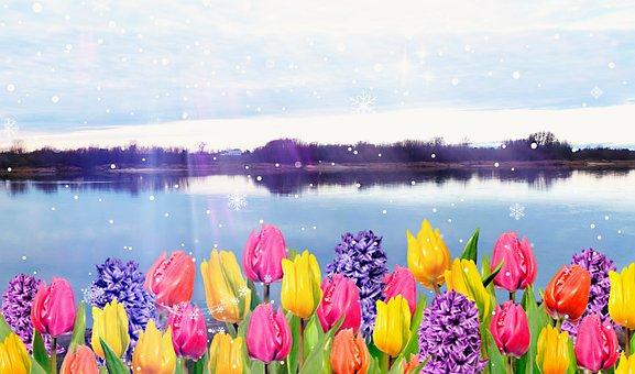 Landscape, River, Snow, Tulips, Precipitation, Light