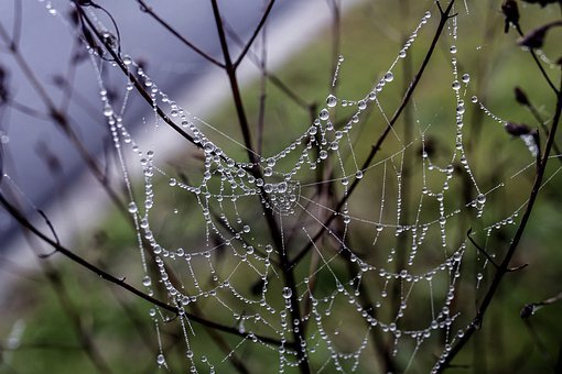 Dewdrop, Cobweb, Cobwebs, Droplets, Transparent, Moist