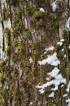 Moss, Tree, Vermont, Nature, Forest, Brown, Outdoor
