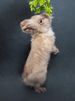 Rabbit, Cute, Animal, Easter, Nature, Grass, Fur