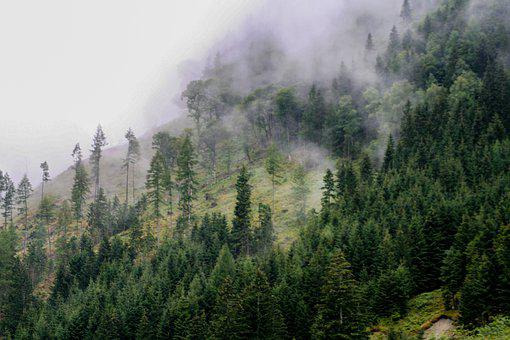 Forest, Fog, Nature, Trees, Landscape, Fairy Tales