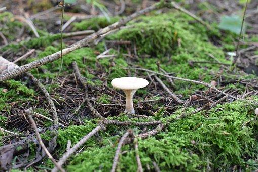 Mushrooms, Nature, Autumn, Moss, Mini Mushroom, Sponge