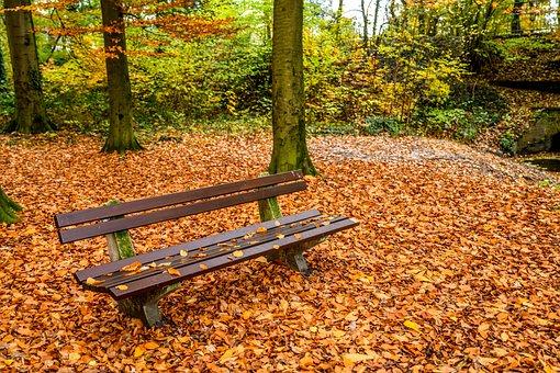 Bank, Park Bench, Autumn, Park, Wood, November, Out