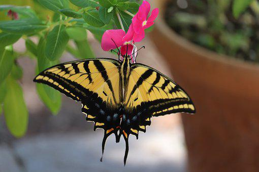 Butterfly, Natural, Wildlife, Pink Flowers, Yellow