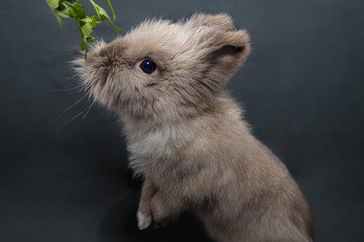 Rabbit, Cute, Animal, Nature, Grass, Fur, Mammals, Ears