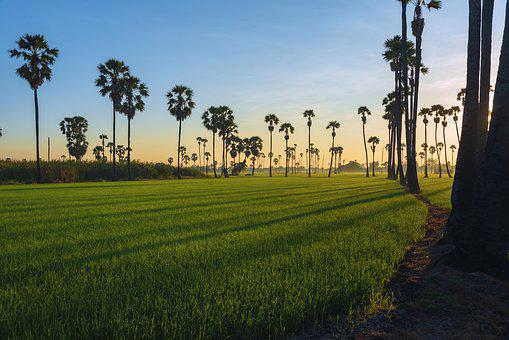 Landscape, Travel, Sunset, Tropical, Outdoor, Rice
