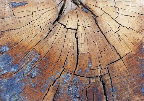 Slice Of Wood, Tree, Crack, The Structure Of The, Trunk