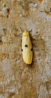 Insect, Flying Insect, Wall, Hooked, Wings