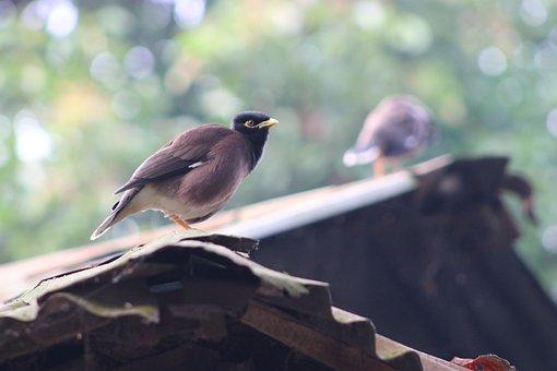 Bird, Spring, Nature, Animal, Parrot, Swan, Branch