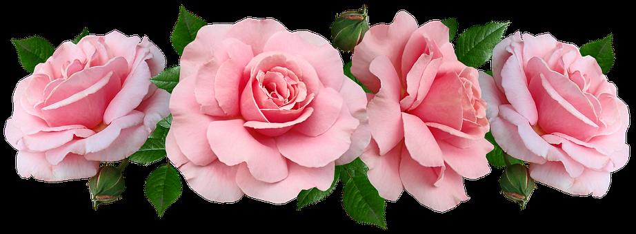 Flowers, Pink, Roses, Fragrant, Arrangement, Cut Out