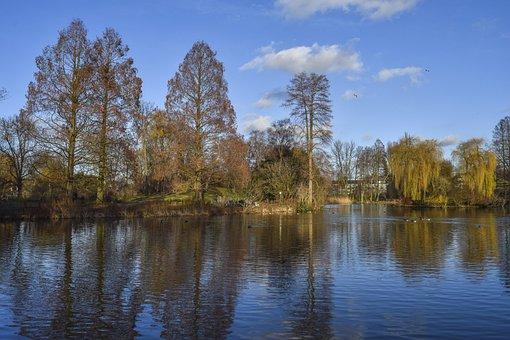 Forest, Nature, Autumn, Landscape, Trees, Hiking, Mood