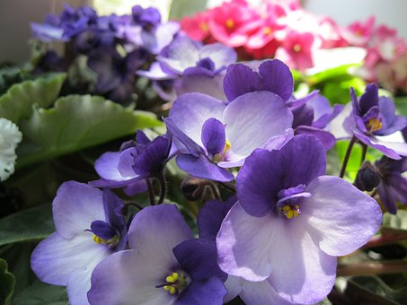 Flowers, Violet, Purple, Flower, Bloom, Beautiful