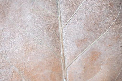 Sheet, Autumn, Veins, The Texture Of The Sheet, Beige
