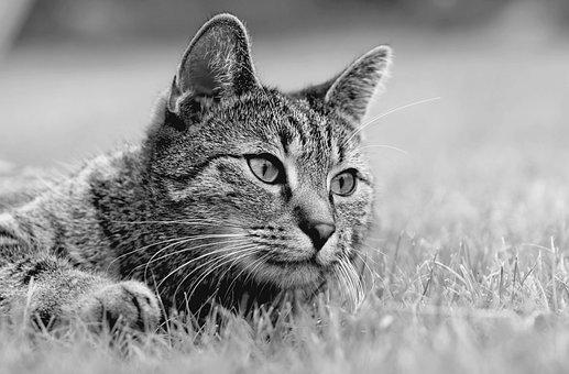 Cat, Meadow, Lies, Nice, Fur, Kitten, Relaxation, Calm