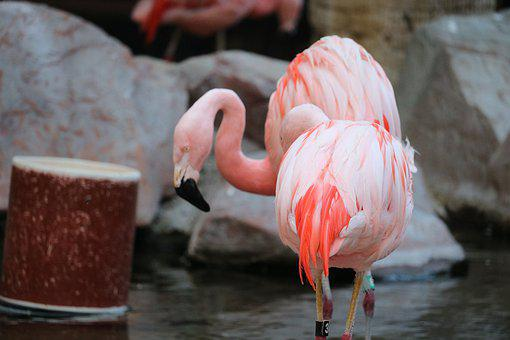 Two, Love, Flamingo, Romance, Young, Lovers, Heart