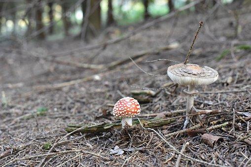 Fly Agaric, Mushrooms, Nature, Autumn, Moss