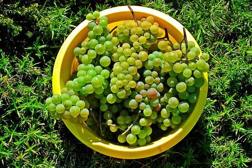 Grapes, Green, Mature, Fruit, Vines, Food, Sweet, Wine