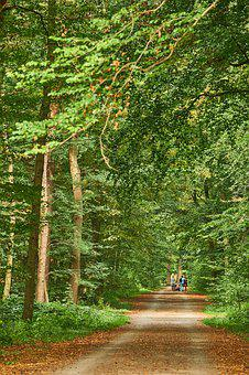 Hanover, Eilenriede, Stadtwald, Forest, Forest Path