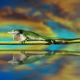 Lizard, Salamander, Reptile, Gecko, Animal