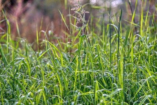Meadow, Grass, Dew, Droplets, Wet, Sparkle, Autumn Sun