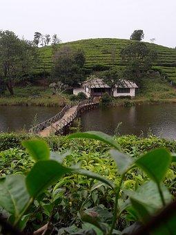 Vagamon, Idukki, Growth, Kerala, Nature, Color