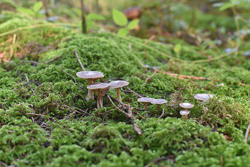 Mushrooms, Nature, Autumn, Moss, Mini Mushroom, Sponge