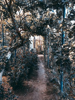 Dacha, Greens, Trees, The Bushes, Nature, Vacation