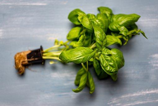 Basil, Root, Tree, Nature, Onion, Garlic, Plant