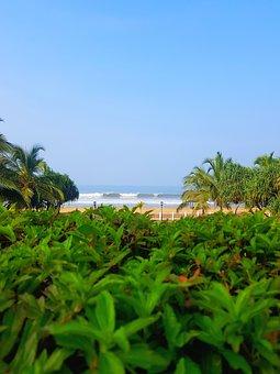 Trees, Beach, Travel, Sea, Island, Ocean, Summer, Sand
